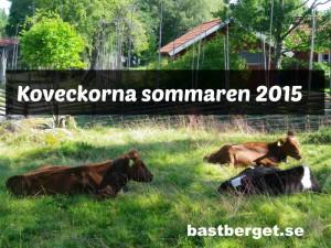 Koveckor sommaren 2015