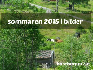 Sommarkollage 2015